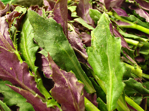 Purple and green mustard leaves