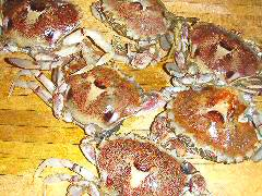Crabs ready to be cooked