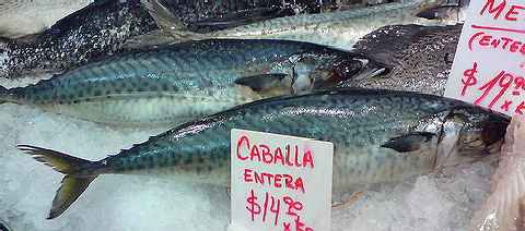 Caballa - Mackerel