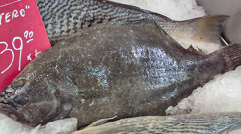 Lenguado - Large-Tooth Flounder