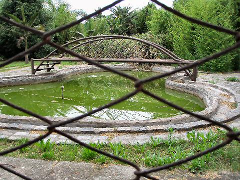 Pond behind fence