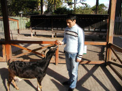Buenos Aires Zoo - at the farm